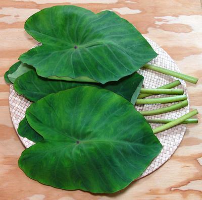 Taro Colocasia Leaves Amp Stems