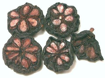 Kokum Phool Gummi Gutta