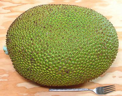 jackfruit, Beautiful flower