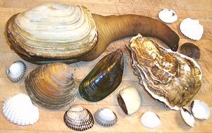Clams Oysters Mussels Amp Scallops