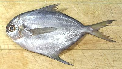 Butterfish for Types of white fish to eat