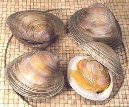 Clams Oysters Mussels Scallops Watermelon Wallpaper Rainbow Find Free HD for Desktop [freshlhys.tk]