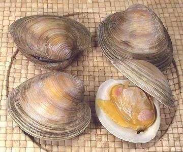 Cherrystone Clams