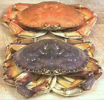 How long to cook dungeness crab