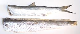 Fish anatomy for Oily fish representative species
