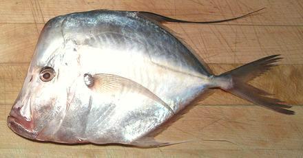 Mexican Moonfish