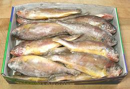 Yellow corvina yellow croaker for Croaker fish recipe