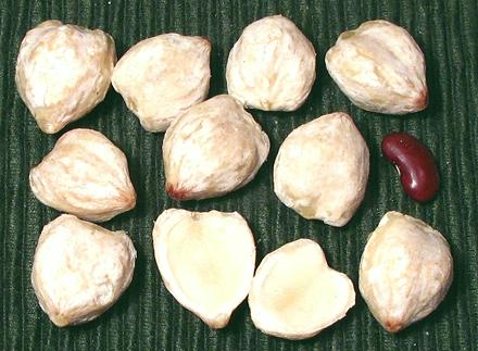 Shelled Nuts