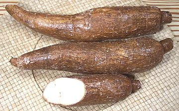 Cassava or yuca